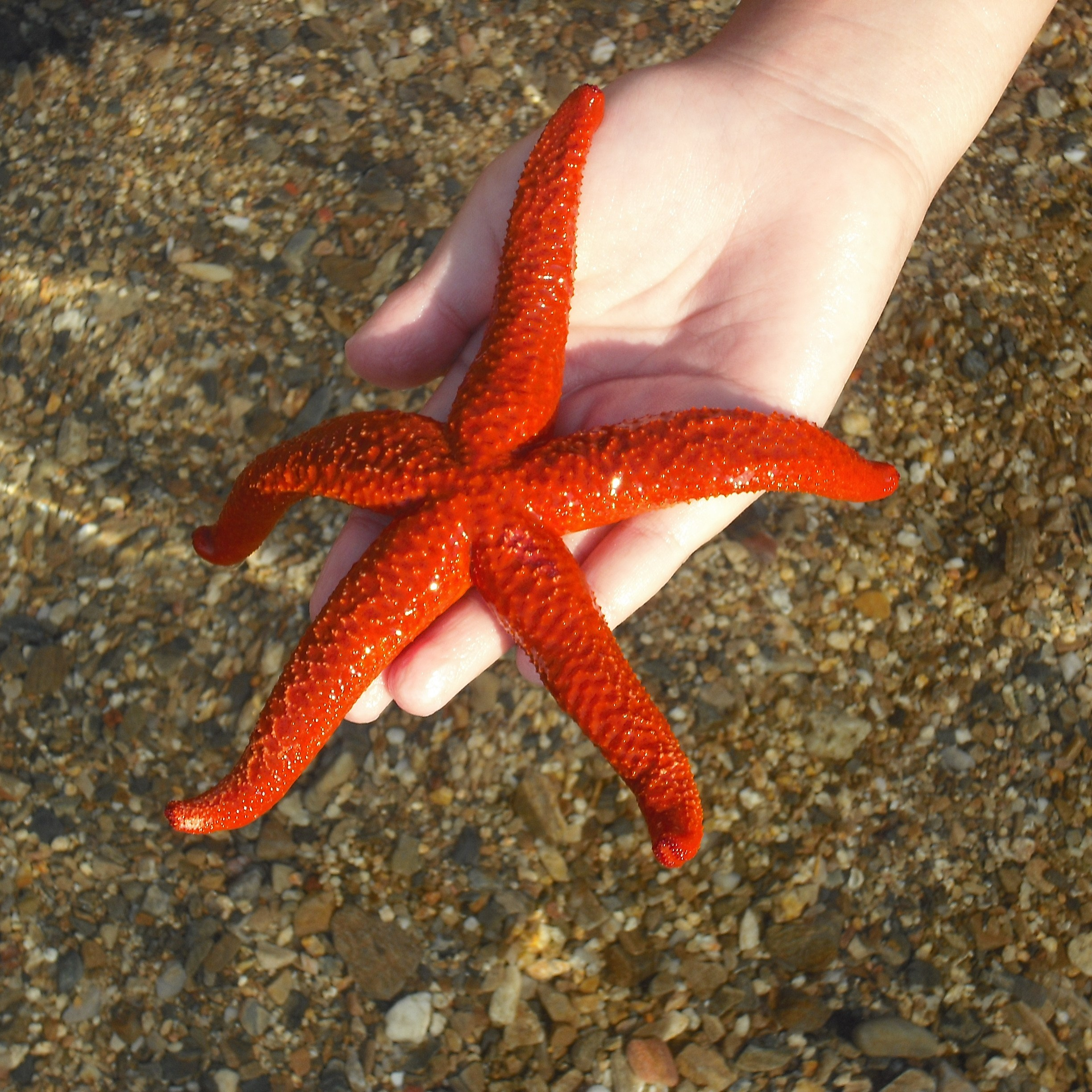A hand shows a red starfish over sand and clear water